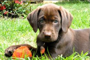 Puppy with orange ball